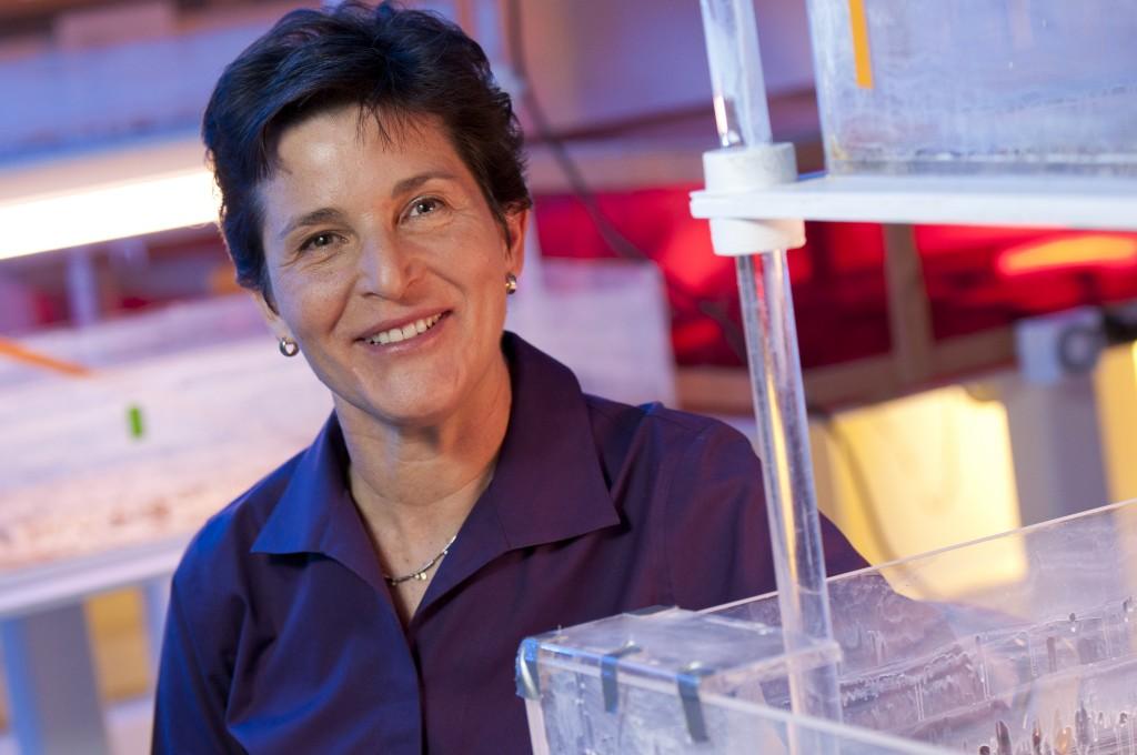 Deborah Gordon, Professor of Biology